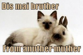 Dis mai bruther   From anuther muther