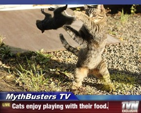 MythBusters TV - Cats enjoy playing with their food.