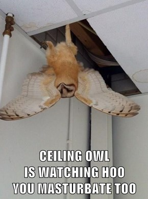 CEILING OWL                        IS WATCHING HOO                    YOU MASTURBATE TOO