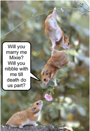 Will you marry me Mixie?  Will you nibble with me till death do us part?