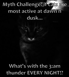 Myth Challenge: if cats are most active at dawn n dusk...  What's with the 3:am thunder EVERY NIGHT!?