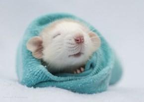 One Baby Bundle of Squeeee!