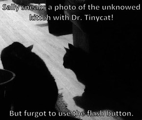 Sally sneaks a photo of the unknowed kitteh with Dr. Tinycat!   But furgot to use the flash button.