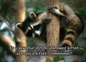 Es u sew shur dat da unknowed kitteh es reely a kitteh?  Hmmmmm?