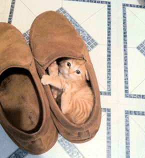 The Cutest Shoe Warmer Ever