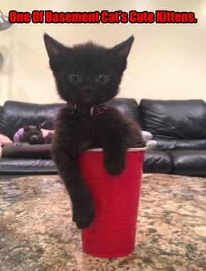 One Of Basement Cat's Cute Kittens.