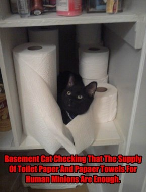 Basement Cat Checking That The Supply Of Toilet Paper And Papaer Towels For Human Minions Are Enough.