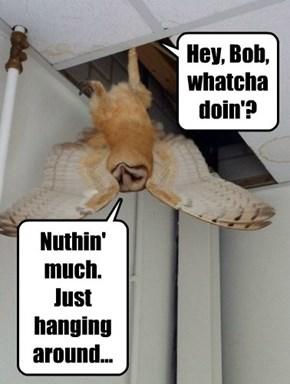Hey, Bob, whatcha doin'?