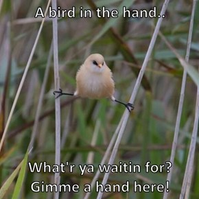 A bird in the hand..  What'r ya waitin for? Gimme a hand here!