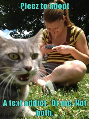 Pleez to adopt   A text addict.  Or me. Not both.