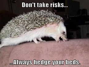 Advice Hedgehog Is A Bit Rude