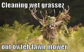 Cleaning wet grassez  out ov teh lawn mower
