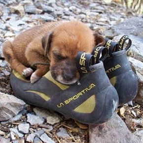 That Boulder Looked So Tiring to Climb, Let's Take a Nap Together Now