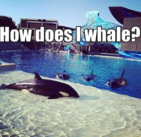How does I whale?