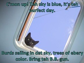C'mon up! Teh sky is blue, it's teh purfect day.  Burds sailing in dat sky, trees of ebery color. Bring teh B.B. gun.