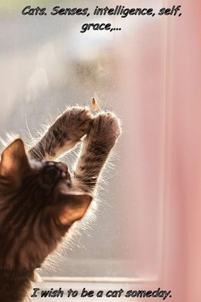Cats. Senses, intelligence, self, grace,...  I wish to be a cat someday.
