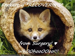 Foxkatt is *RECOVERING*  from Surgery! ♥ WhOOhooOOoo!!!