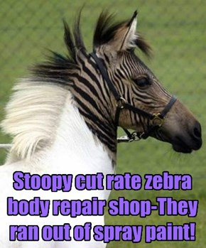 Stoopy cut rate zebra body repair shop-They ran out of spray paint!