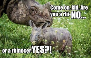 Don't Let The Hippos Push You Around