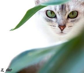 I, Cat