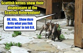 All across Scotland, proud Scottish kitties show what dey fink abowt teh vote to stay in teh U.K.!