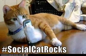 #SocialCatRocks