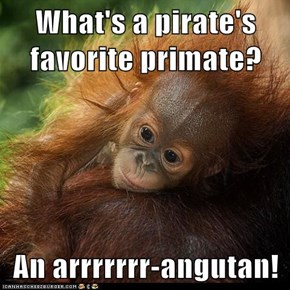 What's a pirate's favorite primate?  An arrrrrrr-angutan!