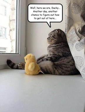 Charles and the Duck