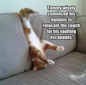 Tommy wisely convinced his humans to relocate the couch for his vaulting escapades.