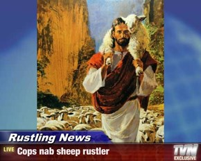 Rustling News - Cops nab sheep rustler