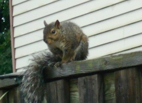 Your Slightly Damp Squirrel of the Day