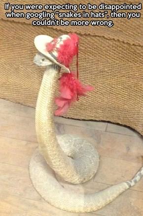 Funny snake in hat