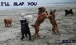 I'LL  SLAP  YOU    SILLY!