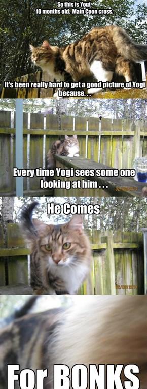 Yogi is bonkers.