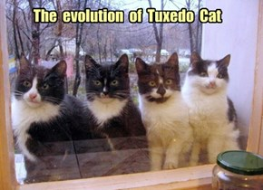 The  evolution  of  Tuxedo  Cat