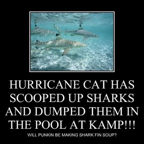 HURRICANE CAT HAS SCOOPED UP SHARKS AND DUMPED THEM IN THE POOL AT KAMP!!!