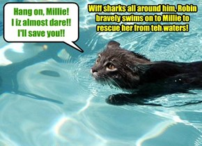 Surely Robin Banks' mission to save Shyster Millie is an impossible qwest wiff no chance of success, yet he bravely swims on!!