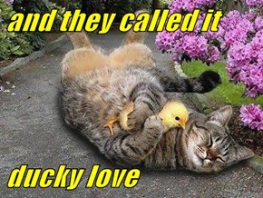 and they called it  ducky love