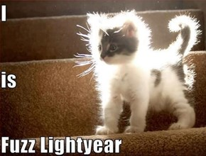 Light Cat