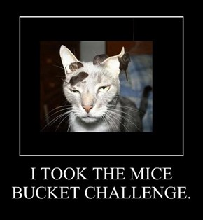 I TOOK THE MICE BUCKET CHALLENGE.