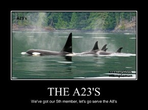 THE A23'S