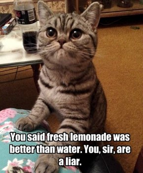 You said fresh lemonade was better than water. You, sir, are a liar.