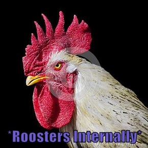 *Roosters Internally*