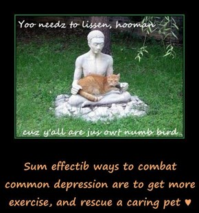 Sum effectib ways to combat common depression are to get more exercise, and rescue a caring pet ♥