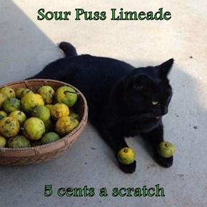 Sour Puss Limeade  5 cents a scratch