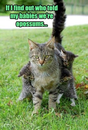 If I find out who told my babies we're opossums...