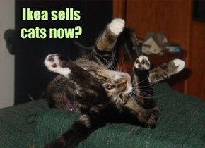 Ikea sells cats now?