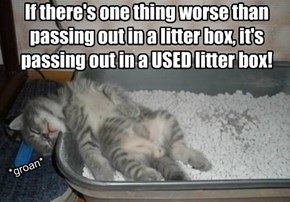 If there's one thing worse than passing out in a litter box, it's passing out in a USED litter box!