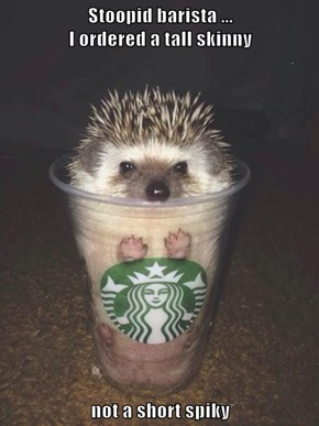 Stoopid barista ...                                          I ordered a tall skinny  not a short spiky