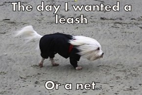 The day I wanted a leash  Or a net.